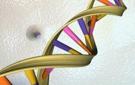 بررسی ژن HER-2