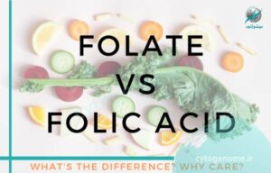 تفاوت اسید فولیک و فولات