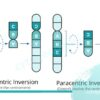 بازآرایی ژنتیکی به چه معناست؟