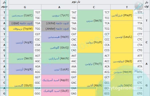کد ژنتیکی استاندارد